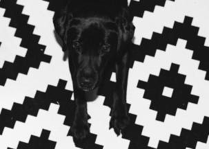 Šuo Kantas – 5 m. Pirkom šunį, kai turėjom tik Ūlą. Planavom antrą vaiką ir pagalvojom, kad šuo neutralizuos pavydą, dėmesio stoką. Taip ir buvo – konfliktų išvengėm. Aš šunį išvedu ryte, vyras – vakare.